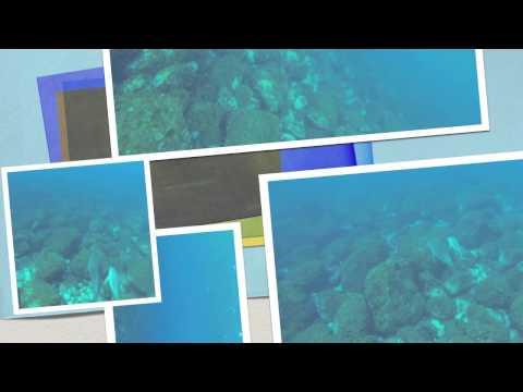 Dolphin ocean swim in Mikura-shima