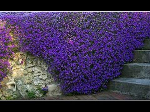 Цветы купить для сада многолетники