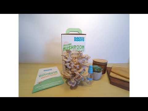 Back to the Roots Organic Mushroom Grow Kit Timelapse