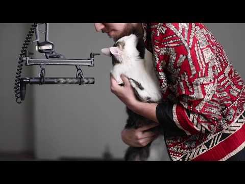MAKING A DUBSTEP GROWL WITH A CAT PURR   Xfer Serum Tutorial