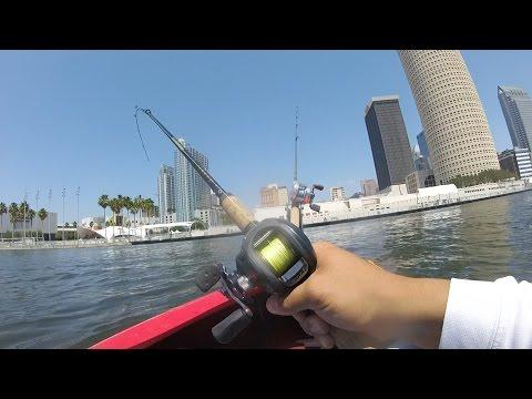 Kayak Fishing Downtown Tampa