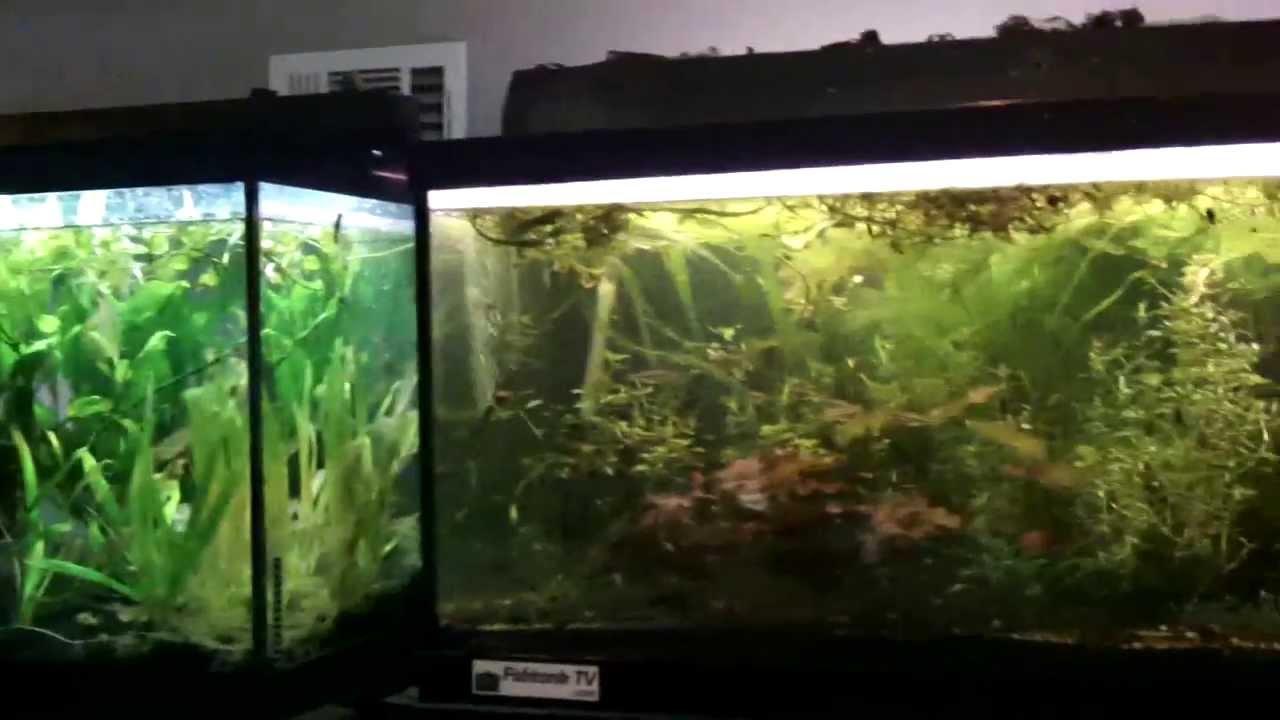 Freshwater aquarium fish no heater -
