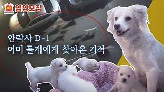 안락사 D-1, 엄마 들개에게 찾아온 기적 | 🥜유기견 호두 이야기 EP1