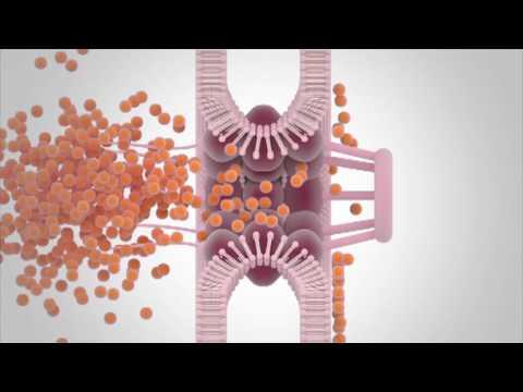 New insights in the molecular changes underlying ALS | Steven Boeynaems | TEDxUHasseltSalon