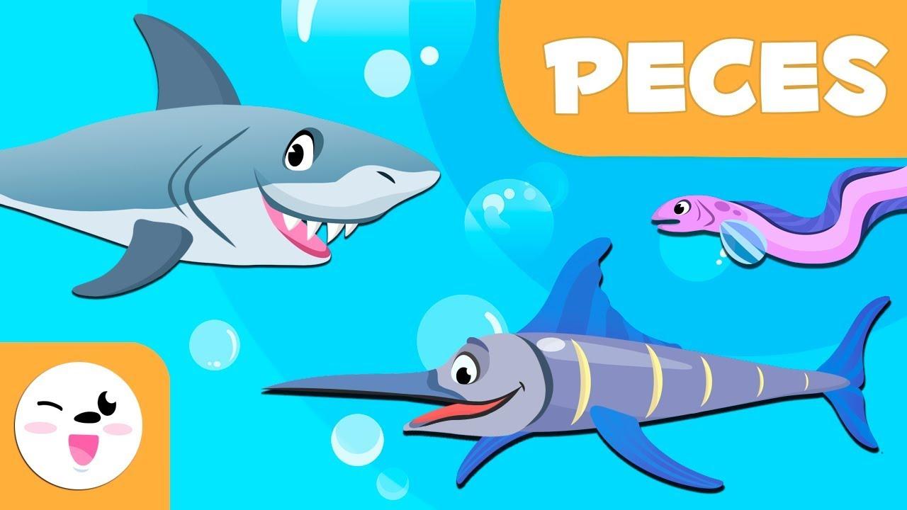 Los peces para ni os animales vertebrados ciencias for Productos para estanques de peces