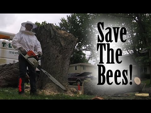 Operation: Save The Bees!