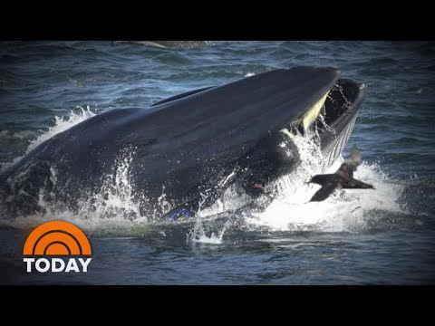Bob Delmont - Have you ever almost gotten swallowed by a whale?