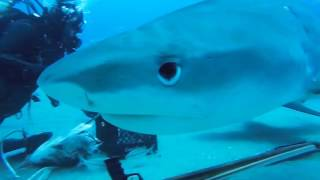 10 ужасов подводных глубин