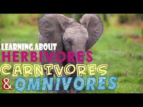 Learning About Herbivores, Carnivores, and Omnivores