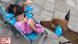 奈良公園でシカにエサやり その2 Deer Feeding Nara Park