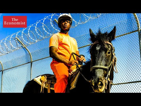 Can horse-whispering prevent reoffending?   The Economist
