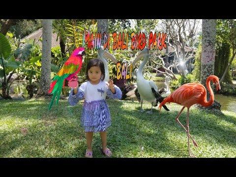 menonton-atraksi-burung-burung-lucu-di-bali-bird-park