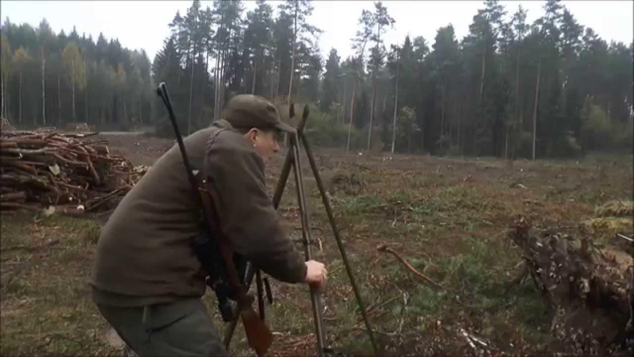rotwild jagd