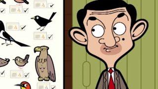 Kijk Zeldzame vogel filmpje