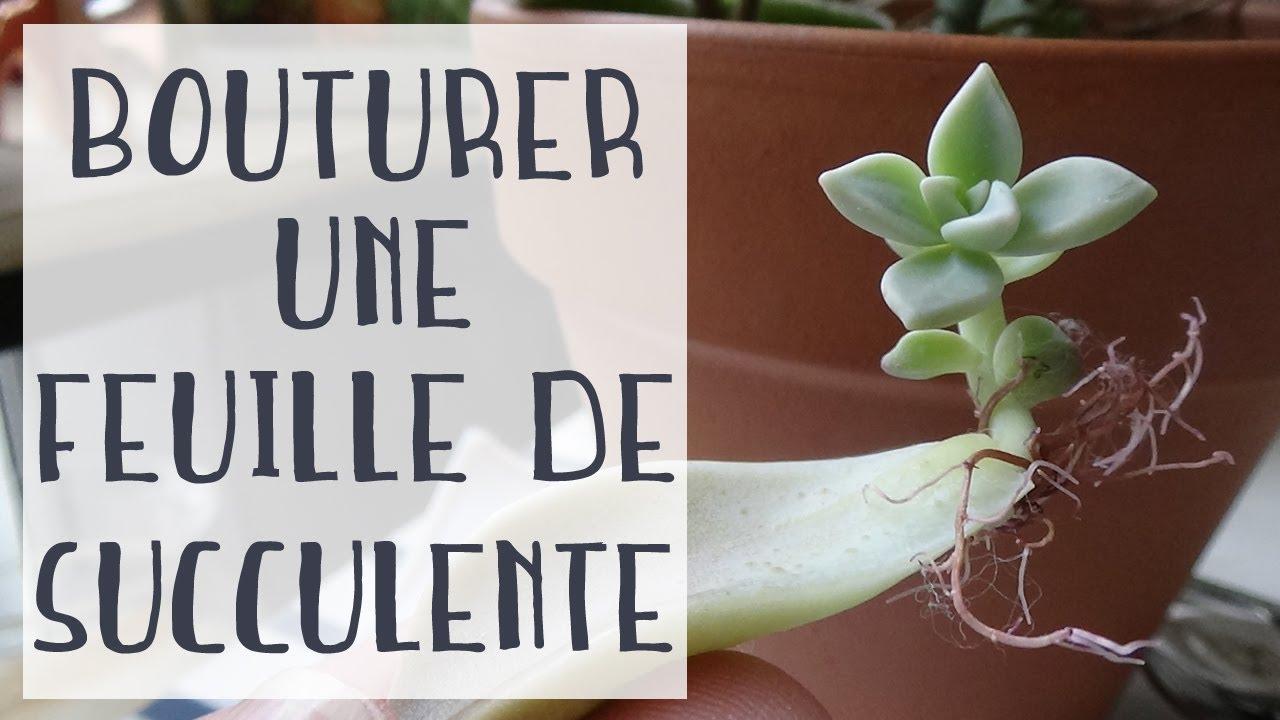 Bouture De Succulente A Partir D Une Feuille Mes Premiers Essais