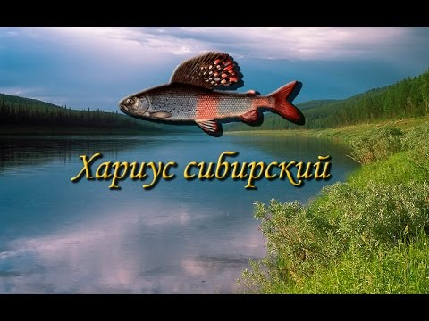хариус сибирский рыбалка 3 на что ловить
