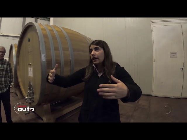 Conheça a maior produtora de vinhos da América Latina