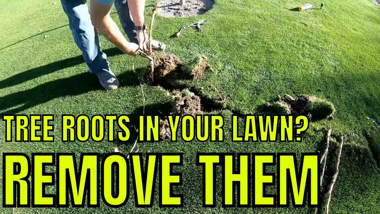 How To Remove Tree Roots From Your Lawn