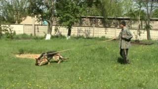 дрессировка собак: СЛЕДОВАЯ РАБОТА
