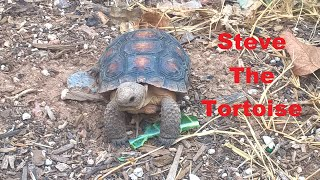 Desert Tortoise update and Habitat overview