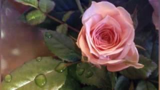 Roze, Roze (svešinieka Zieds) Leijerkastnieki.wmv