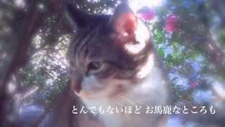 最近浜田さんを知って11月4日 初めて渋谷WWWのライヴへ。 この曲はライ...