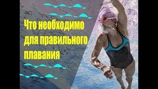 Обучение плаванию в Бишкеке! Экипировка и инвентарь для плавания. ФТКР