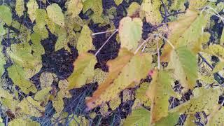 Осенняя природа...