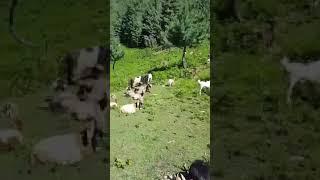 Azad Kashmir Pakistan