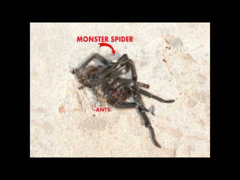 Huge Spider Found In Palo Duro Canyon - Texas Creepy Critters