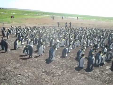 Norwegian Sun Volunteer Point Falkland Islands January 2017 seven