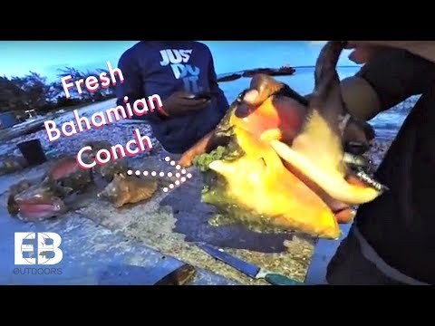 Diving for CONCH off Island - Catch Clean Cook (BAHAMAS)