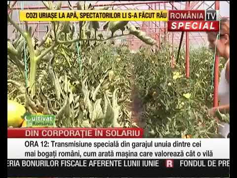 Oferte producatori legume(www.rndr.ro/legume)