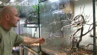 Black mamba feeding