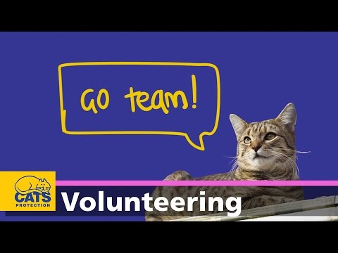 Volunteering For Cats Protection