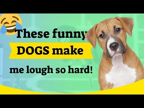 These funny dogs make me laugh so hard!