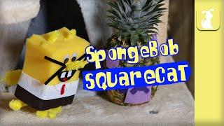 SpongeBob SquarePants (Cute Kitten Version)