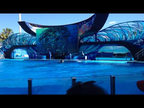One Song For A Brand New Day - Live At Shamu Orca Whale Show - Cute Orca Whales 🐳!
