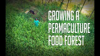 Aanandaa Farms: The joy of growing a food forest using Perma...