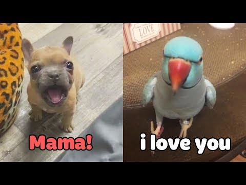 Little Dogs Said 'Mama' - Funny Parrots Speaking English | Pets Club Video 2020