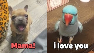 Little Dogs Said 'Mama'  Funny Parrots Speaking English | Pets Club Video 2020
