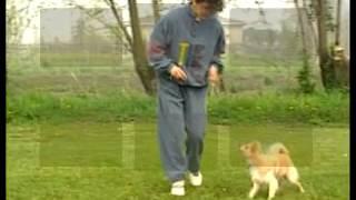 Аджилити - вид собачьего спорта, видео, дрессировка - Мир животных