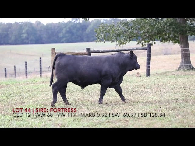 Edgewood Angus Lot 44