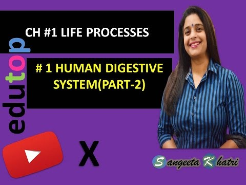 LIFE PROCESSES- digestive system part 2 CH#6 (class X and XI)