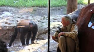Jane Goodall Visits Old Friends at Taronga