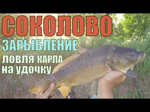 Рыбхоз Соколово. Глобальное зарыбление! Ловля карпа на поплавочку.
