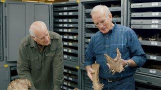 How are dinosaur footprints and eggs evidence for a global Flood? - Dr. Art Chadwick