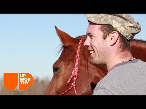 These horses help Veterans after they come home.