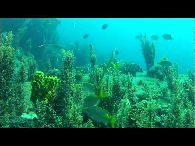 Fonds sous-marins des Anses d'Arlet.avi