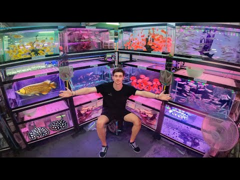 Inside Asia's *LARGEST* Aquarium Fish Market!! ... (Bangkok Thailand) $$$